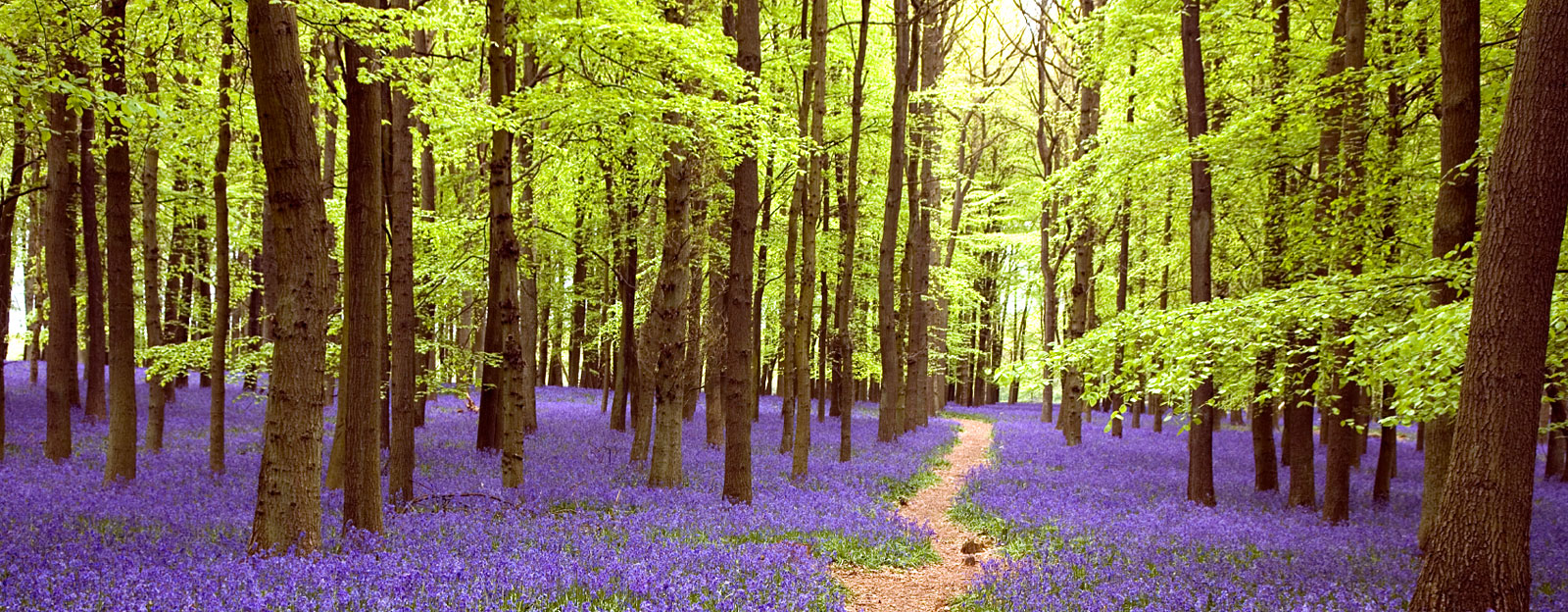 Inner Path Home Forest Path Purple